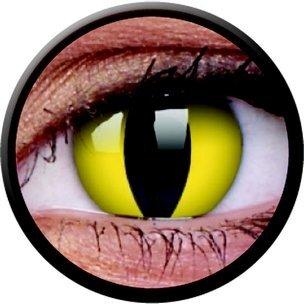 Cats Eye (Annuelles) (2 lentilles)